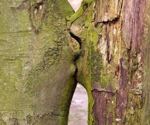 love, kiss, and nature image