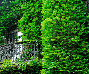 balcony, nature, and green image