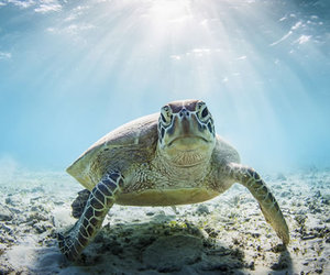 turtle and beach image
