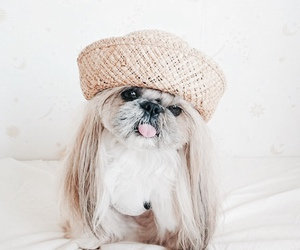 adorable, funny, and hat image