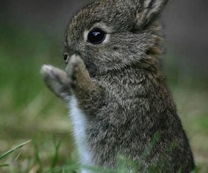 cute, bunny, and carrot image