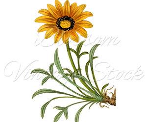 botanical, etsy, and print image