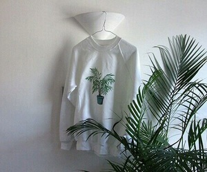 pale, plants, and white image
