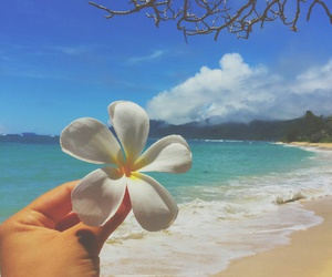 beach, flower, and photography image