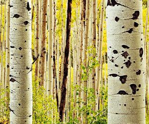 aspen, nature, and travel image