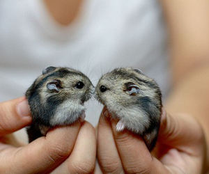 adorable, amazing, and hamster image