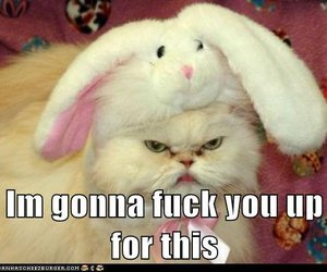 angry, cat, and fml image