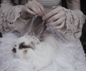 rabbit and white image