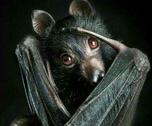 animal, bat, and black image