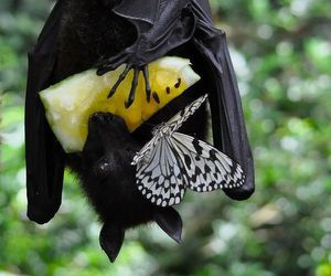 bat, butterfly, and animal image