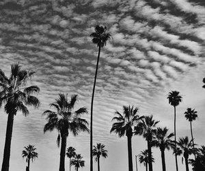 palms, b&w, and black image