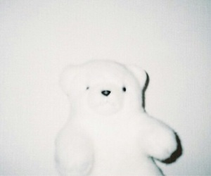 bear, くま, and white image