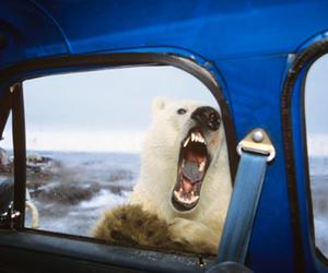 Polar Bear and bear image