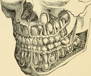 anatomy, learn, and dentistry image