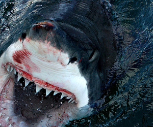 shark, water, and sea image
