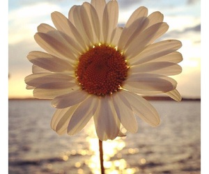 flowers, sun, and summer image