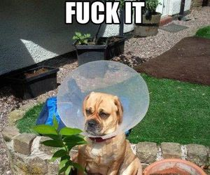 dog, funny, and flowers image