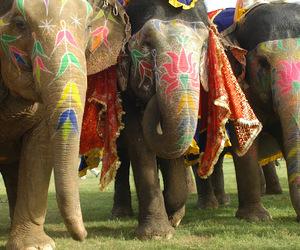 beauty, colors, and elephant image