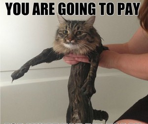 bath time, cat, and funny image