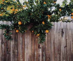 nature, hipster, and fruit image