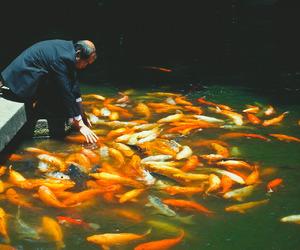 asia, beautiful, and fish image
