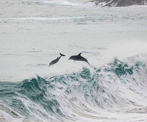 wave and dolfin image