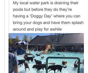 dogs, tumblr, and water park image
