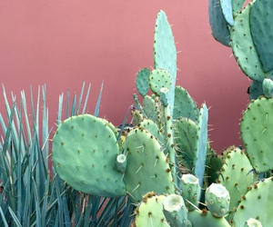 cacti, iphone, and tumblr image