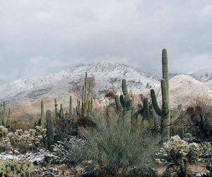 cactus, nature, and mountains image