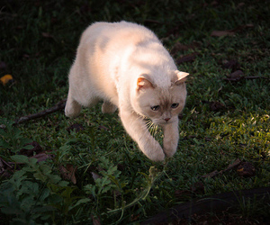 cat, nature, and outside image