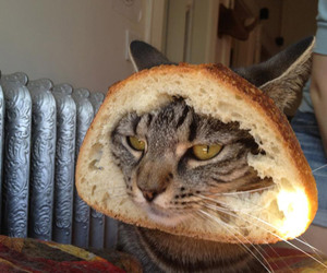 bread, cat, and lol image