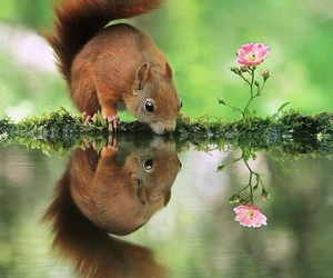 squirrel, animals, and nature image
