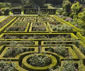 background, garden, and maze image