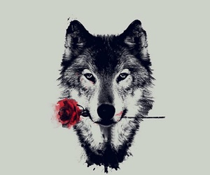 roses, wolf, and lovethem image