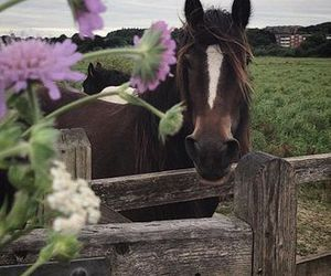 flowers, horse, and free image
