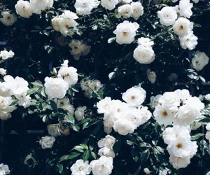flowers, beautiful, and cute image