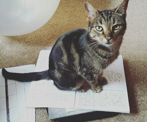 books, cats, and cat image