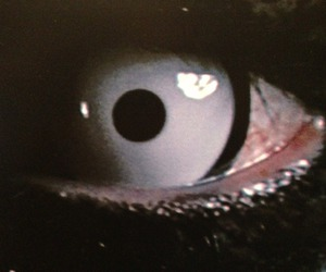 dark and eye image
