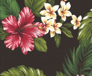 background, colours, and tropical image