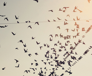 birds, fly, and Flying image