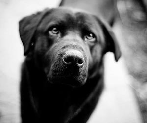 black and white, dog, and cute image