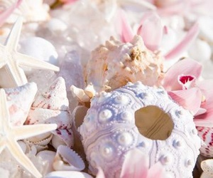pink, pastel, and shell image