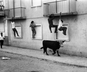 animal cruelty and cruelty image
