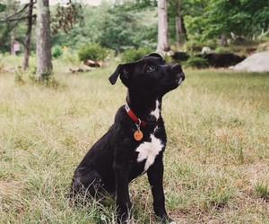 animals, cachorro, and dog image