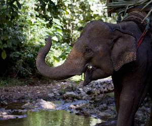 elephant, animal, and tropical image