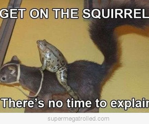 funny, frog, and squirrel image