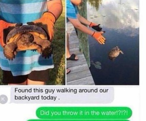 funny, turtle, and tortoise image
