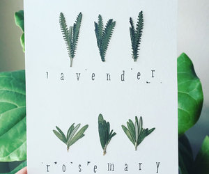 etsy, herb garden, and pressed leaves image