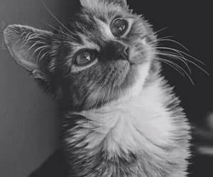 b&w, kitty, and nature image