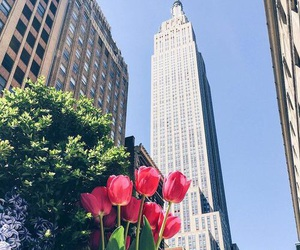 flowers, new york, and wallpaper image